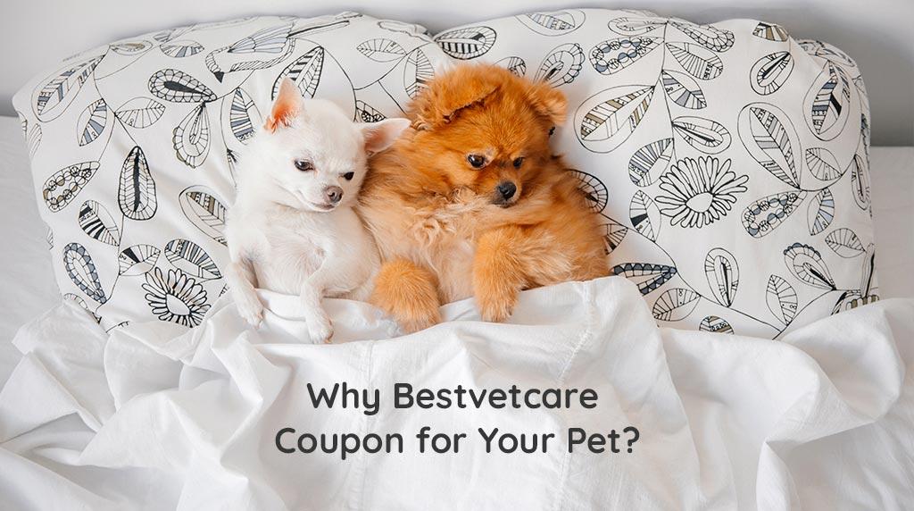 bestvetcare coupons